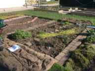 Physic Garden workshop
